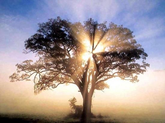 Дерево Жизни. Способ работы с группами детей, переживших травмирующую ситуацию